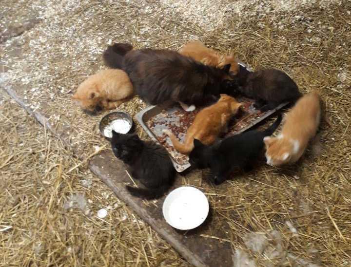 Kattungarna som stals var bara fem-sex veckor gamla.