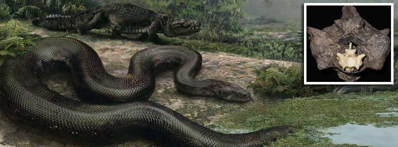 Jätteormen levde till största delen under vatten, och den lilla infällda bilden visar en av de ryggkotor som hittats från ormen i en kolgruva i Colombia.