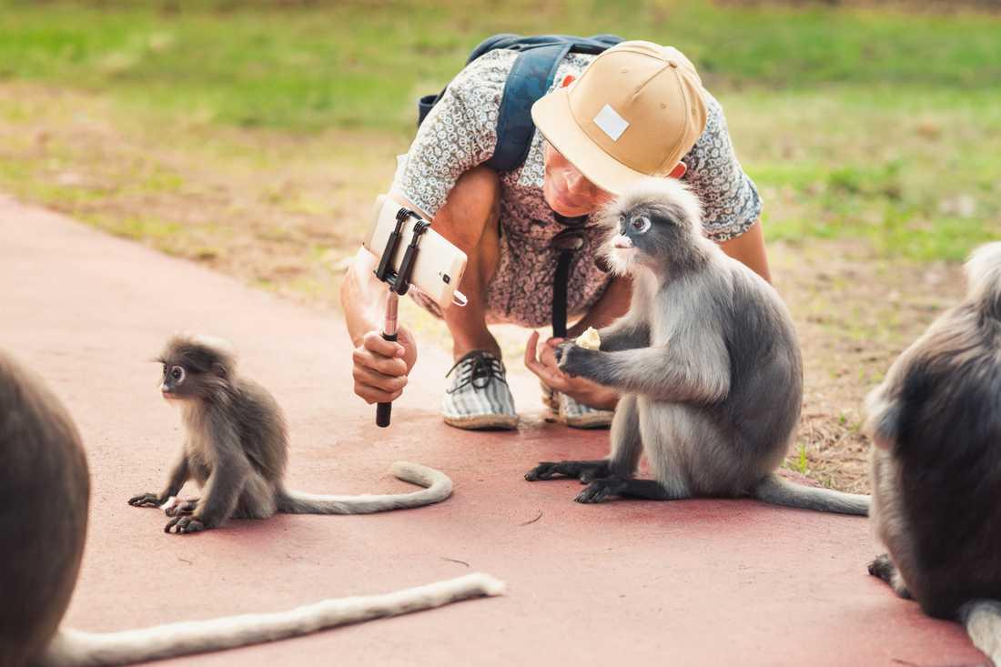 Turister uppmanas att undvika selfies med vilda djur i en ny kampanj.