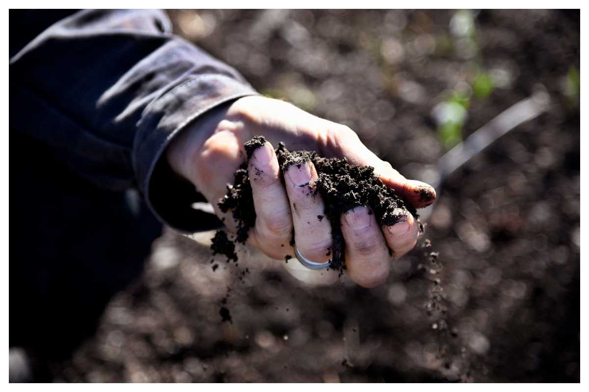 Jordens ska vara lättarbetad och släppa igenm luft och vatten till växternas rötter.