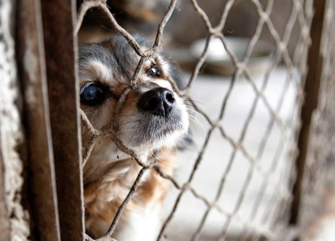 Två personer har anhållits misstänkta för djurplågeri. Hunden på bilden är inte en av de som fanns i den aktuella transporten. Arkivbild.