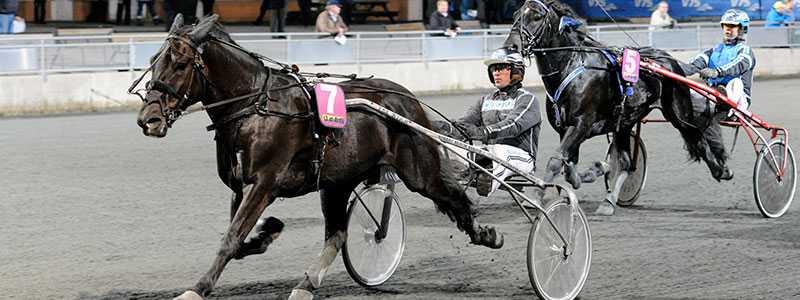 Nordsjö Douglas med tränaren Robert Bergh.  Experten Michael Carlsson spikar hästen på V64.