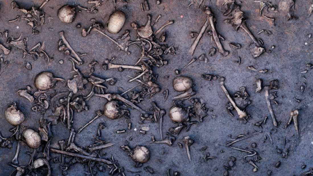 Slaget var mycket blodigt. På sina håll låg de döda tätt intill varandra. På ett tolv kvadratmeter stort område hittade arkeologerna 1478 ben inklusive 20 kranier. Antagligen var flera tusen krigare involverade i bataljen.