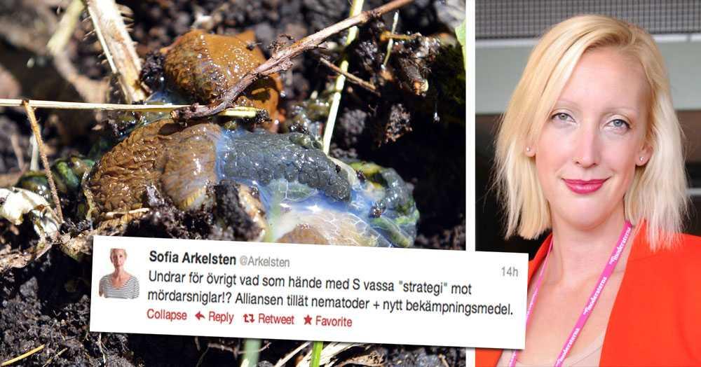 MÖRDANDE UTSPEL. Sofia Arkelsten pikade Socialdemokraterna för deras påstådda brist på strategi mot mördarsniglar.
