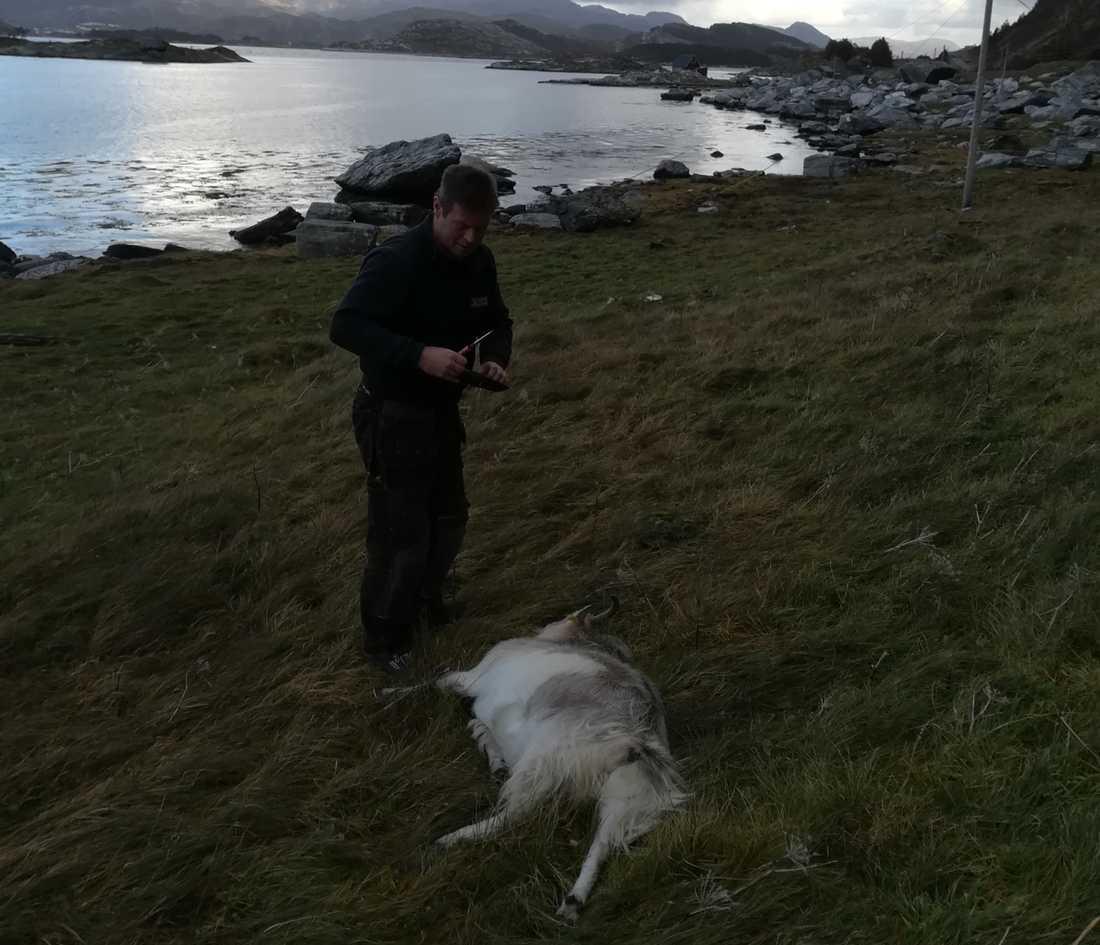 Geir Nesbakk uppmanar nu den som kör på ett djur att anmäla skadan.