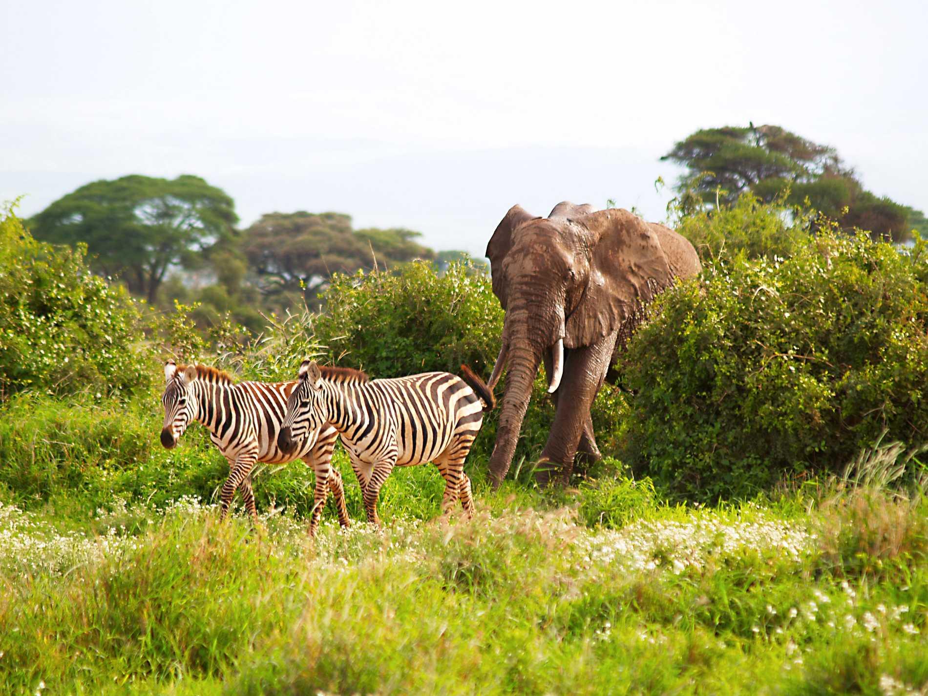 Safarin i Kenya var riktigt häftig, berättar Ann-Christine.