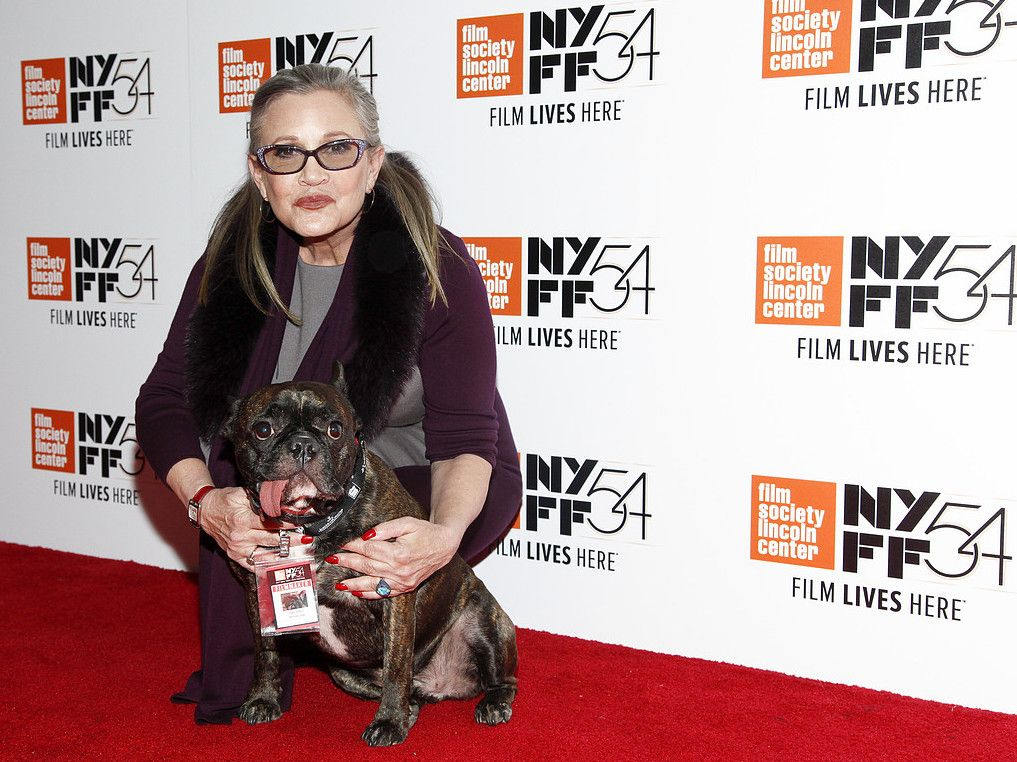 carrie fishers hund gary fisher med i star wars the last jedi aftonbladet. Black Bedroom Furniture Sets. Home Design Ideas