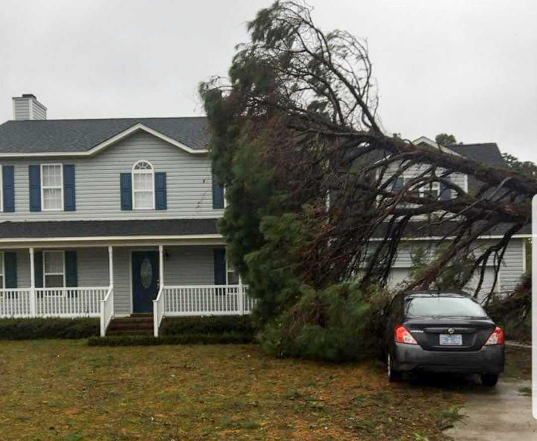 """""""Jag har precis varit och hjälpt en granne såga ner ett träd som fallit"""", säger Jeremy Tominack till TT. Så här såg det ut innan trädet sågades ner."""
