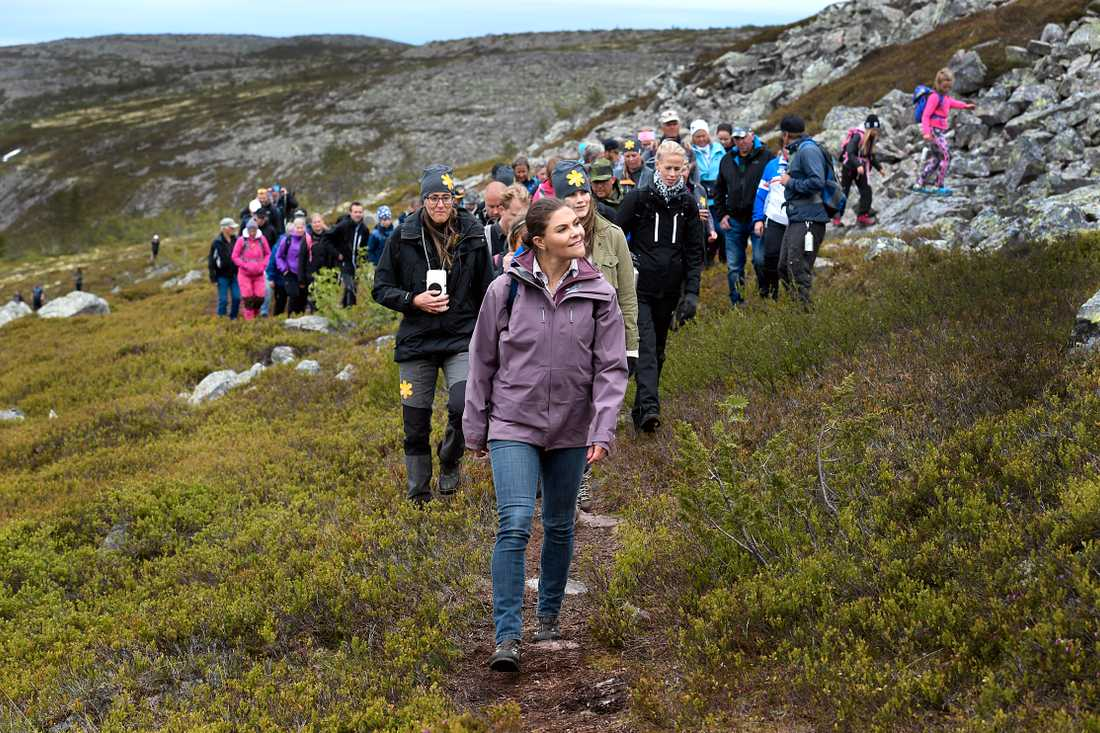 Den sista vandringen gick i Fulufjällets nationalpark.