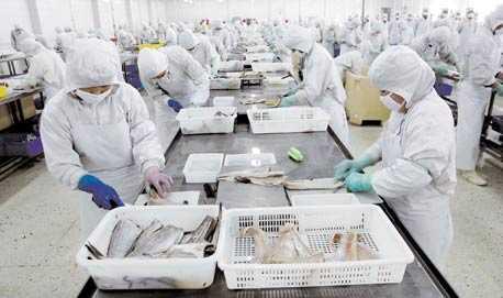 1500 ARBETARE På en av fiskfabrikerna i Qingdao arbetar 1500 kineser med att filea fisk som körs hit från hela världen. Fisken anländer fryst och tinas i stora kar innan den kan fileas, packas och frysas igen som fiskblock, filéer eller fiskpinnar. I fabriken håller man fisk i lager för minst en månads arbete för att aldrig stå utan råvara.