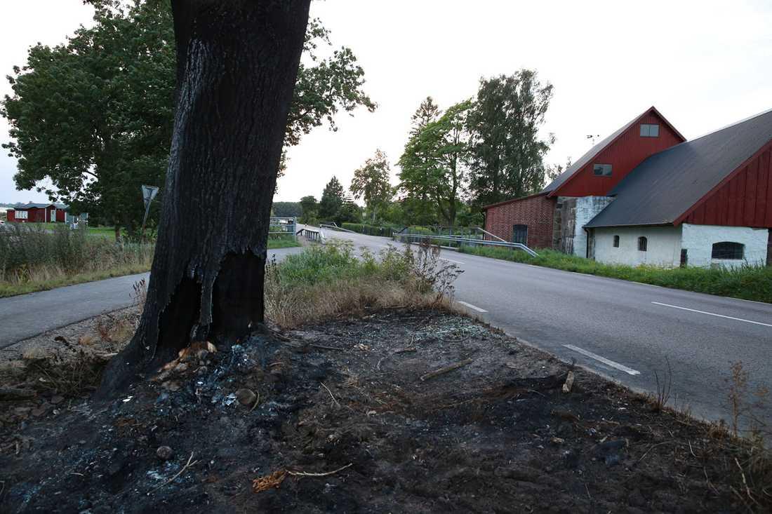 50-åringen körde rakt in i trädet. Bilen fattade eld och mannen dog.