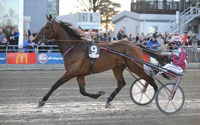 Lutfi Kolgjini tror att Archangel AM tar en ny V75-seger om han håller sig på benen i Eskilstuna.