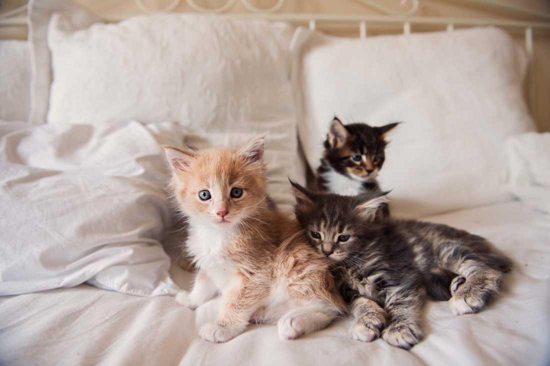 Arkivbild på katter.
