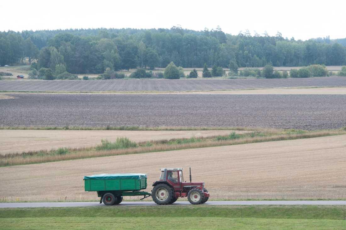 Många lantbrukare känner sig inte längre trygga. Arkivbild.