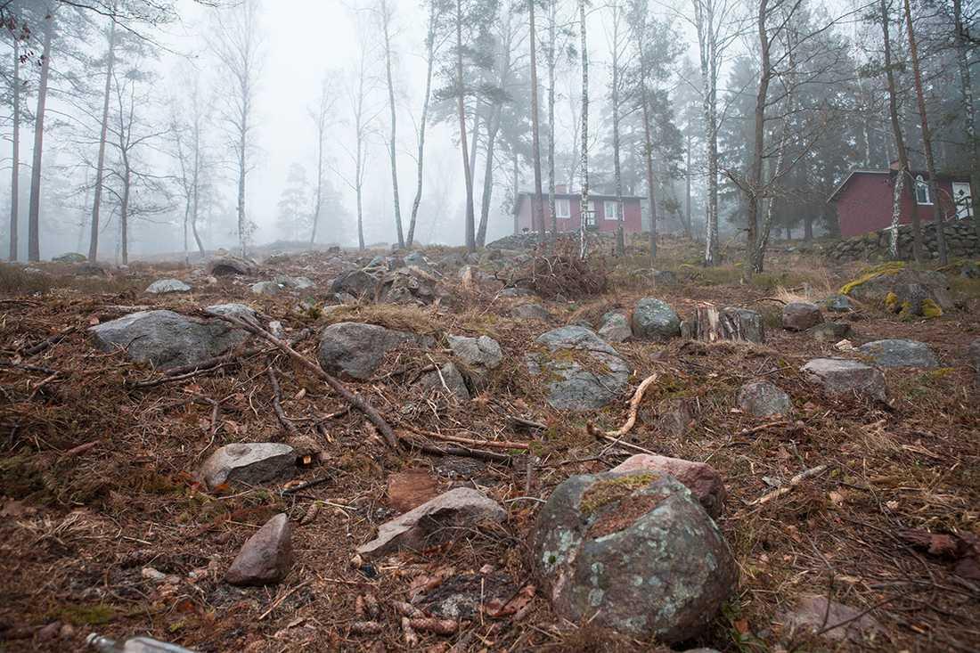 Jan Emanuel Johanssons bolag Dandelion polisanmäls nu av Sollentuna kommun efter att man avverkat träd inom strandskyddsområde.
