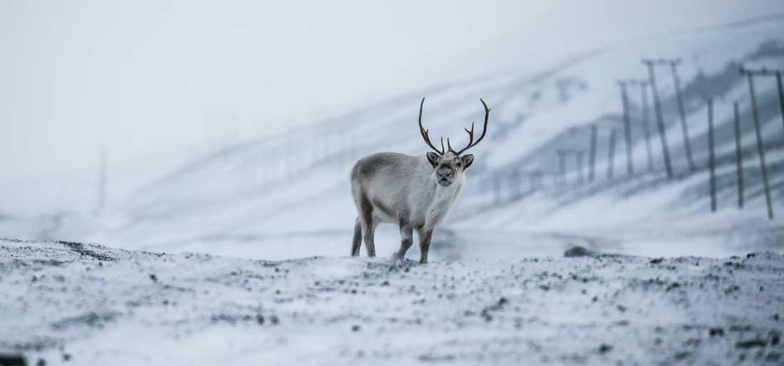 Det har varit kallare än på länge på Svalbard. Arkivbild.