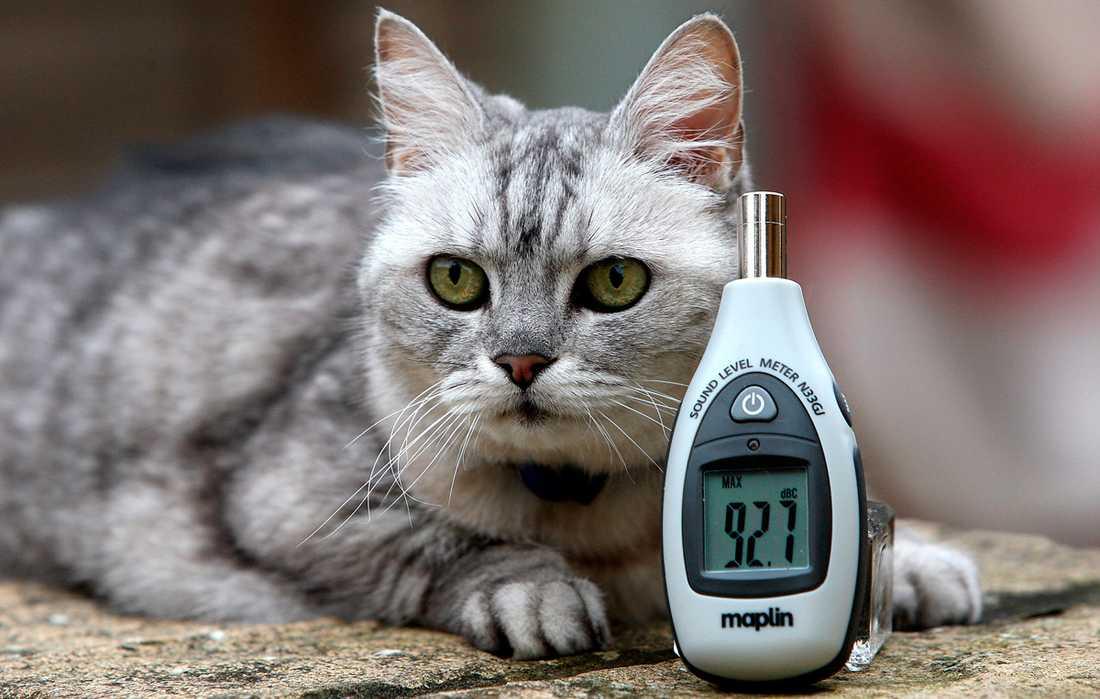 LJUDNIVÅ PÅ 92 decibel När Smokey, 12, spinner, vilket är mest hela tiden, gör hon det med besked.
