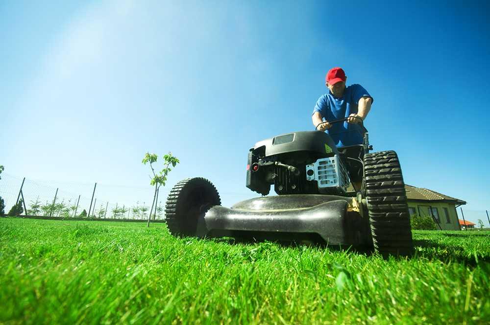 Dags att börja vårda gräsmattan. Klipp ofta men inte för långt.