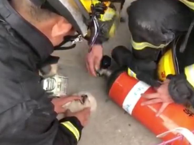 Strax efter att brandmannen börjat med HLR kom hunden till medvetande igen.