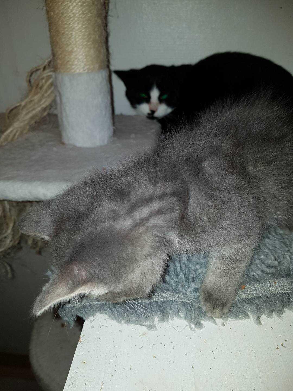 Katterna hade övergivits.