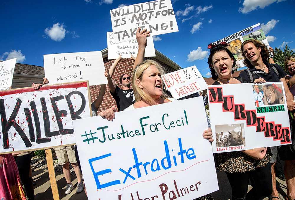 I USA har protesterna mot tandläkaren Walter Palmer varit minst sagt hätska.