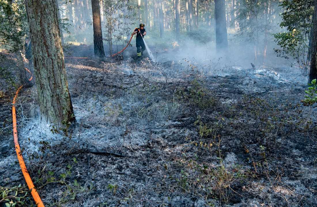 Under förra sommaren brann det flera gånger i ett naturområde i Åhus. Nu döms en kvinna till fängelse för att anlagt två av dem. Arkivbild.