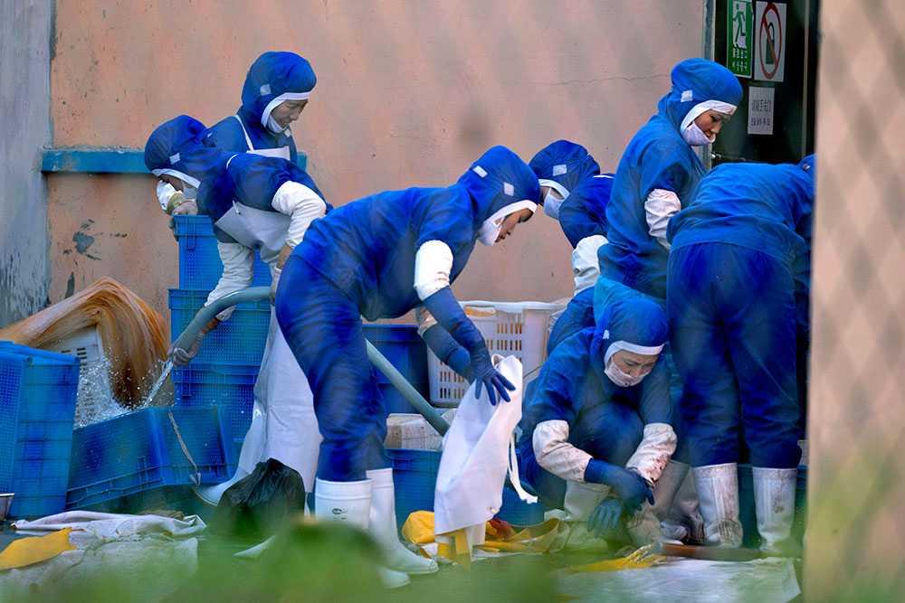 Nya bilder visar hur nordkoreanska arbetare städar upp efter dagens arbete vid en skaldjursfabrik i nordöstra Kina.
