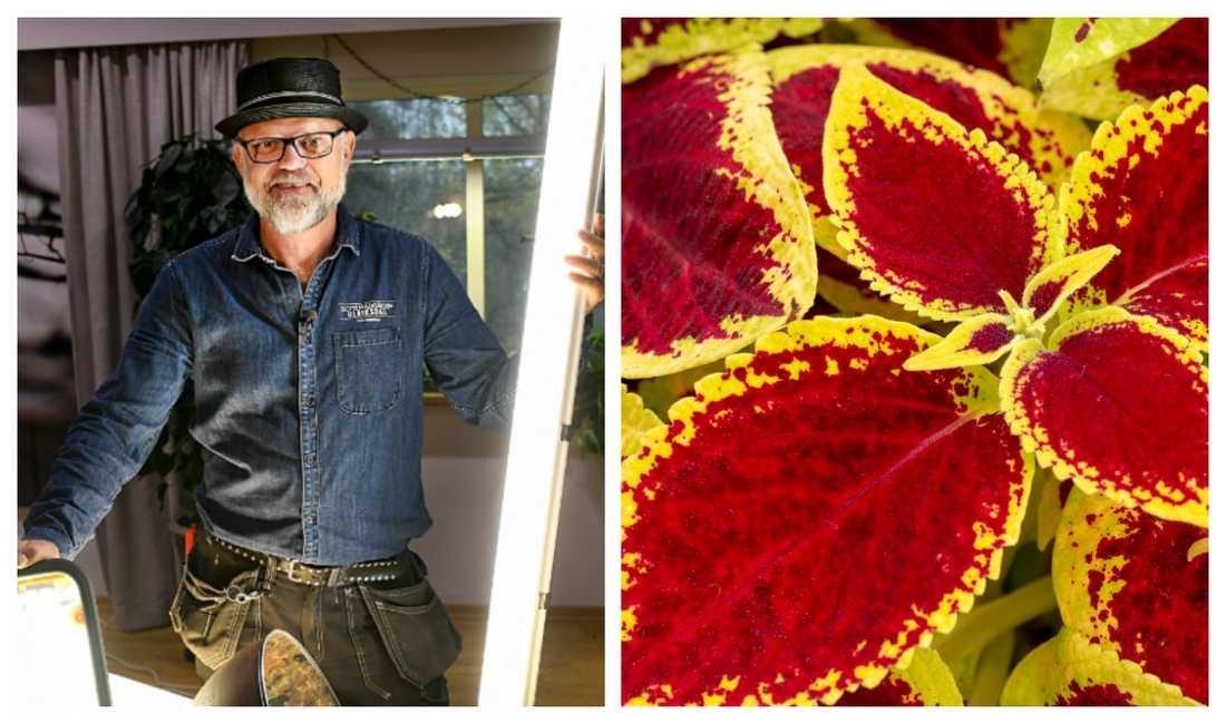 Växtbelysning är betydligt enklare än de flesta tror, säger Bosse Rappne.