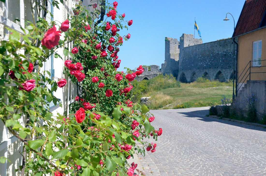 Visby bjuder på blomsterprakt nästan överallt.