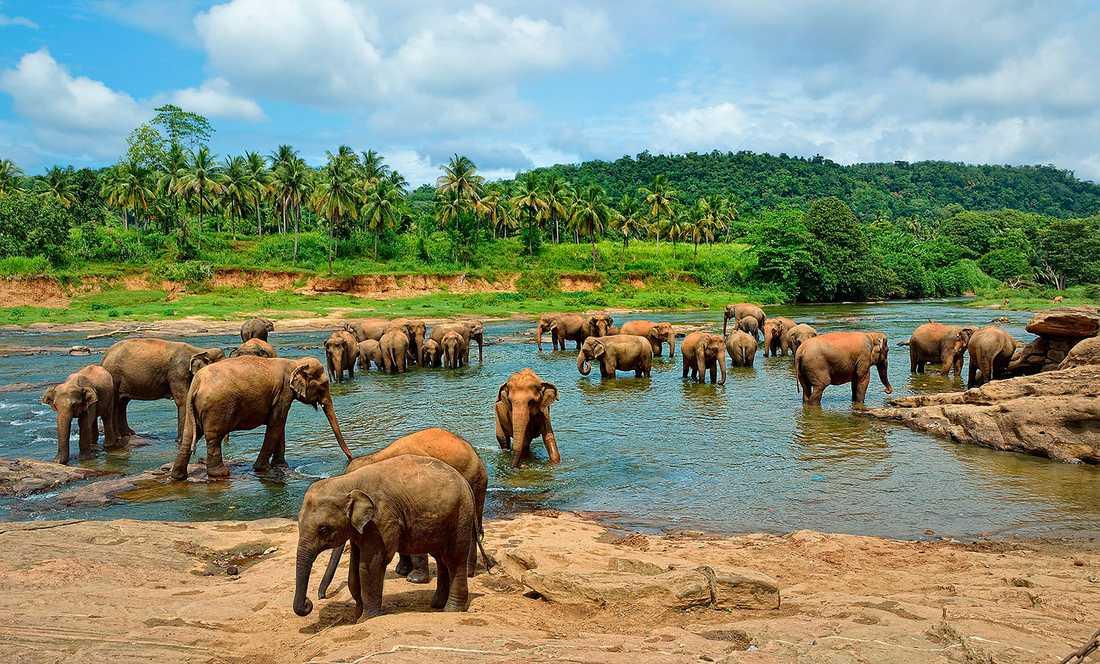 Gör ett besök i någon av naturreservaten  på vackra Sri Lanka.