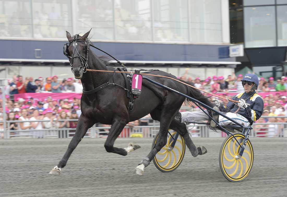 Elitloppsvinnaren Nuncio är en av alla stjärnhästar som är uppstallad hos Svenska Hingsthållare.