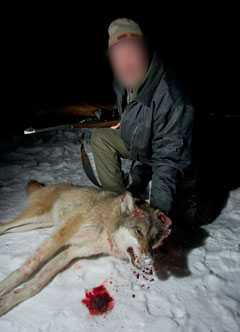 Ingen av vargjgarna i Värmland vill ställa upp med namn och bild av rädsla för hot.