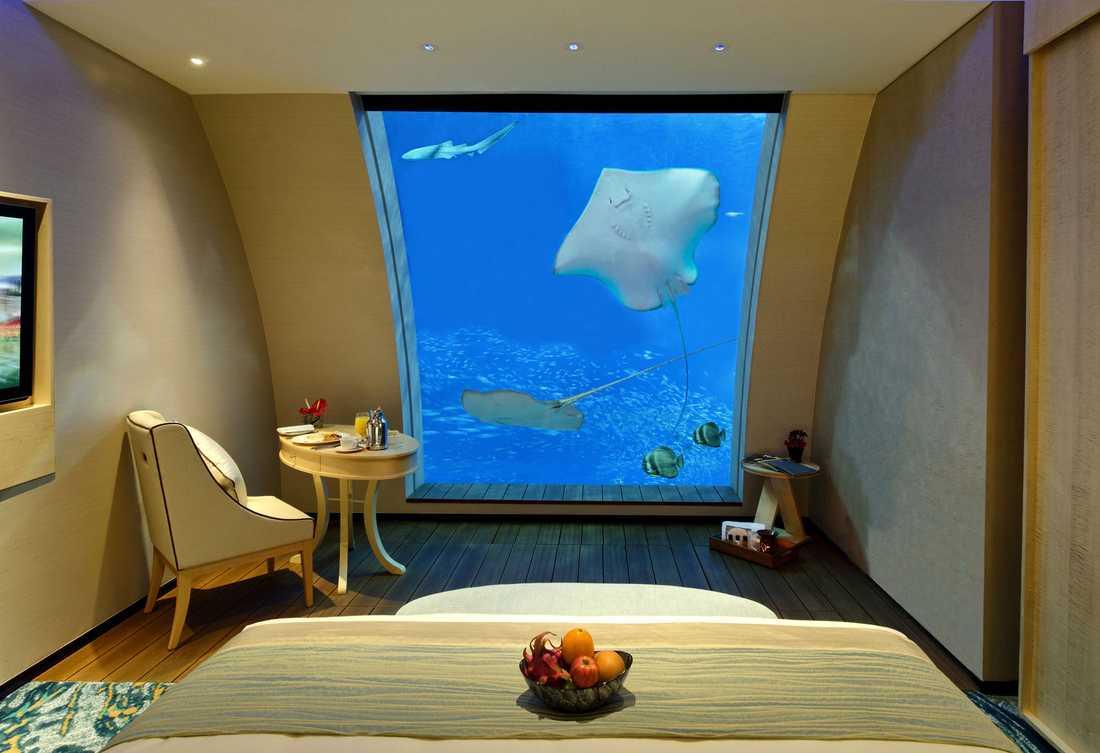 Ocean-sviterna på Equarius Hotel i Singapore ligger i direkt anslutning till världens största akvarium. Även från sängen har du finfin koll på fisklivet utanför fönstret.