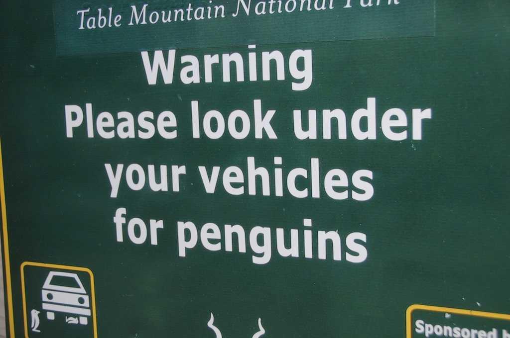 Se upp för pingviner – under bilen. Bilden är inskickad av Pär.