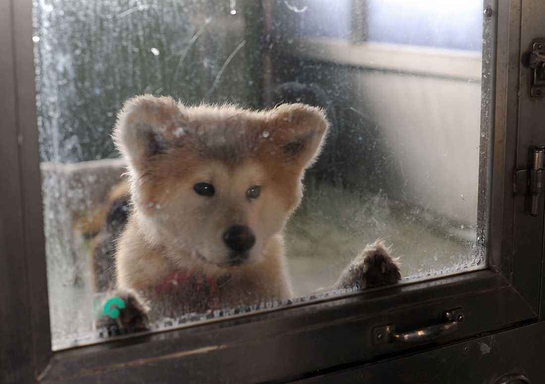 Hund väntar på avlivning i ett av massavlivningsdepåerna.