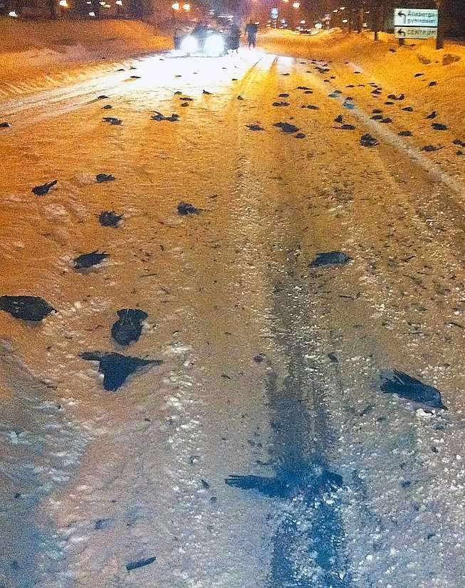 Fågelskräck i Falköping Inatt hittades cirka 100 döda fåglar.
