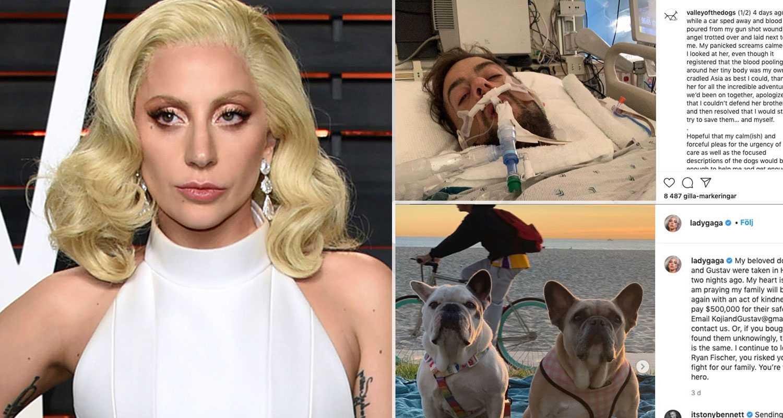 Fem gripna efter kidnappningen av Lady Gagas hundar