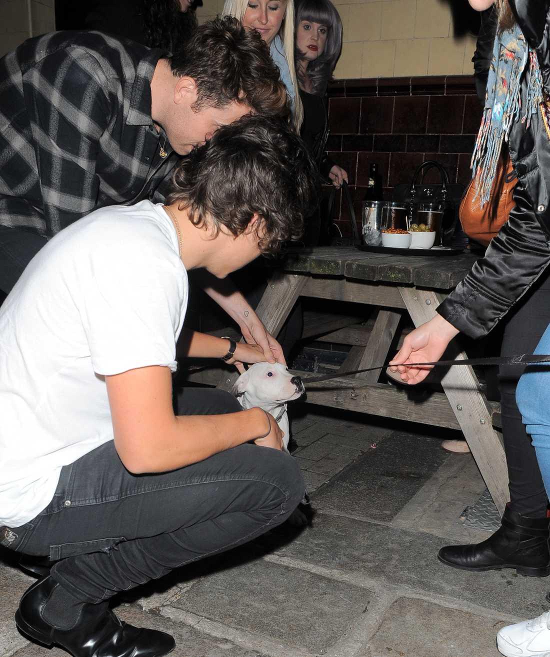 Harry klappar en hundvalp  gulliggulligull!!