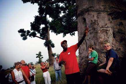 Utanför Saly övergår landskapet i ett savannliknande landskap med de karakteristiska baobabträden utslängda här och där. Urtidsträden kan bli tusentals år och de reser sig som elefantfötter ur marken.