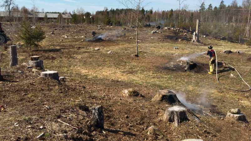 Elden spred sig in på ett område med 40 000 kvadratmeter skog.