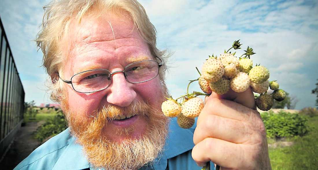 Räddare i nöden Åke Truedsson räddar sommaren för jordgubbsallergiker.