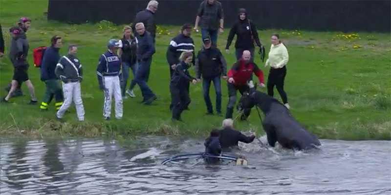 Hästen Come Together kom loss och skenade ner i vattnet på Solvallas innerplan.