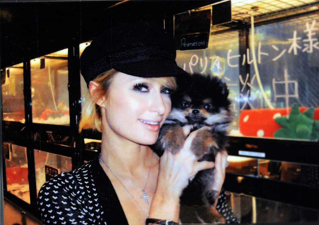 Kändisar som Paris Hilton har spätt på trenden med husdjur som accessoarer.