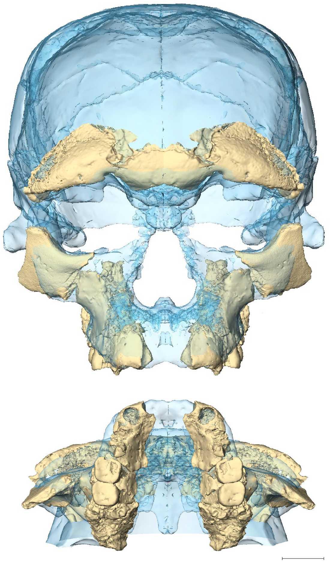 Ansiktsformen hos de tidiga Homo sapiens i Marocko visar att vår arts ansiktsskelett var relativt modernt utformat redan för drygt 300000 år sedan.