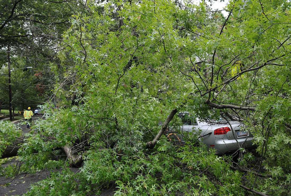 Washington, District of Columbia: En bil har krossats av ett träd.
