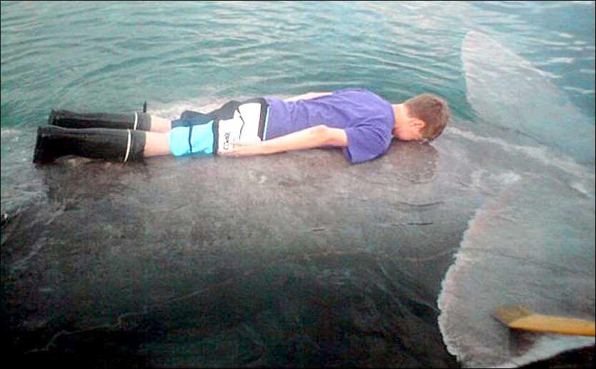 Planking Norske Bendik,14, och hans syster Ellen, 17, mötte hajen när de var ute på båttur. Att planka på hajen var en bra idé tyckte syskonen.
