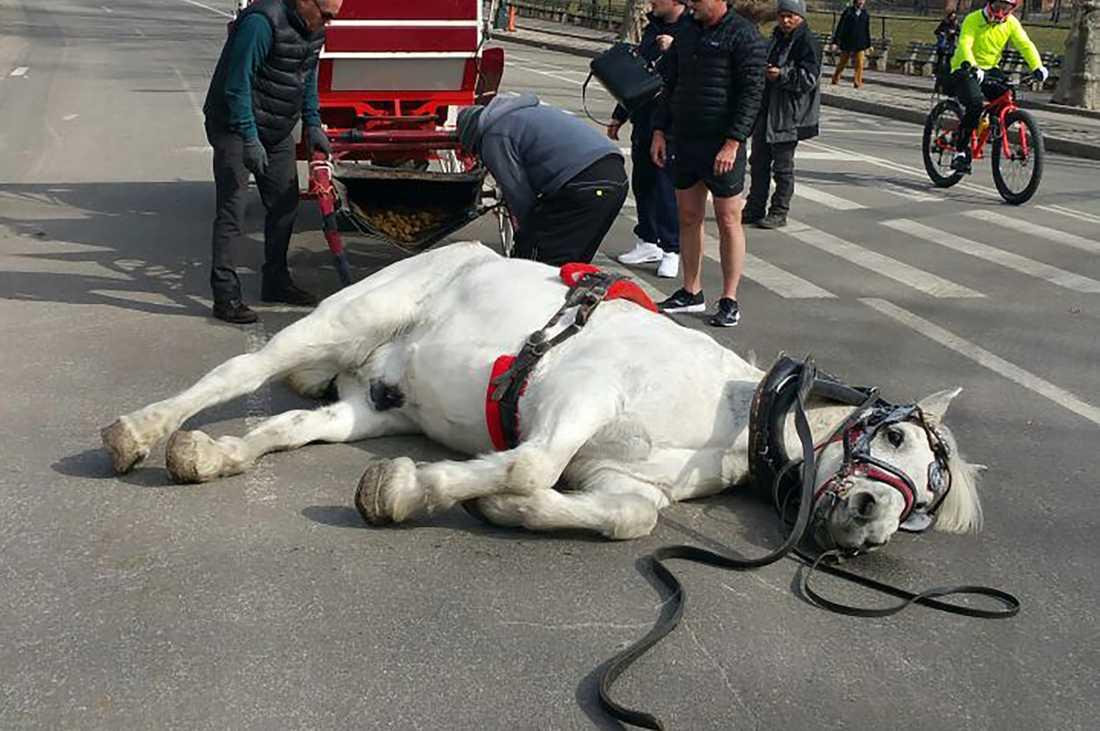 Vittnen på plats säger att hästen andades häftigt innan den föll ihop.