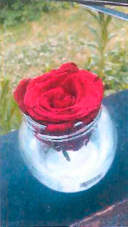 Bild på den röda rosen som kvinnan ska ha kommit hem med.