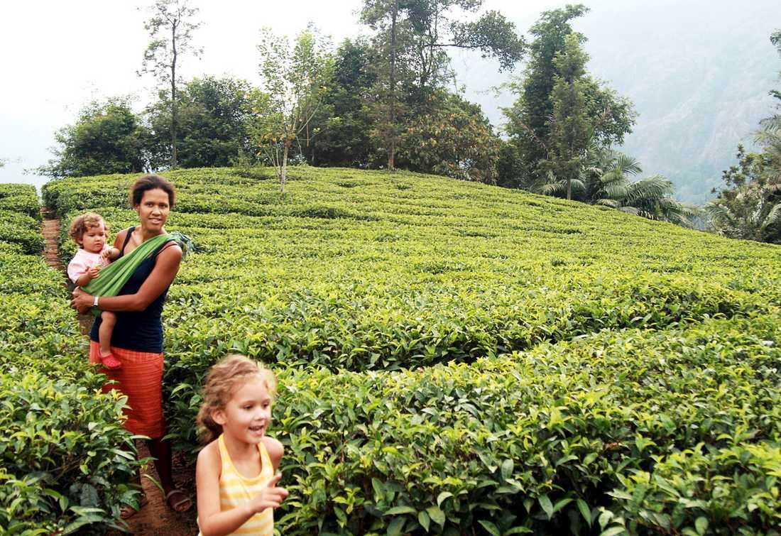 Teplantagerna uppe Wayanad ger både svalka och fina vyer. Femåriga Febe har bråttom bort till vattenfallet och lillasyster Selma och mamma Nneka hänger på.