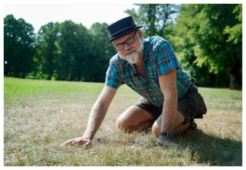 Torr och ful gräsmatta? Så här räddar du den.